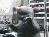 Newyorkrat