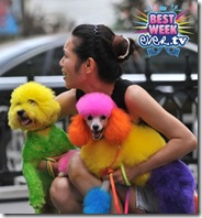 China-Dog-Grooming-4