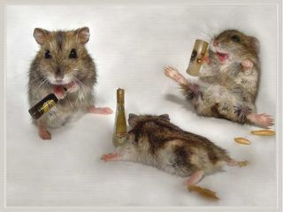 Drunk-Mice-animal-humor-1993688-1024-768