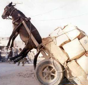 Funny-pictures-mule-trouble-0WS