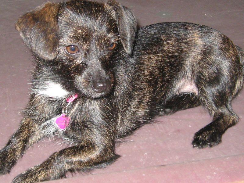 Kayla Mix Terrier 1 Yr F 002