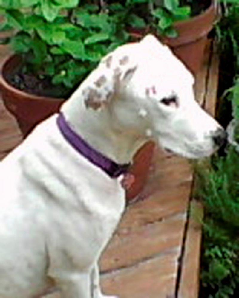 Dog 2 for blog