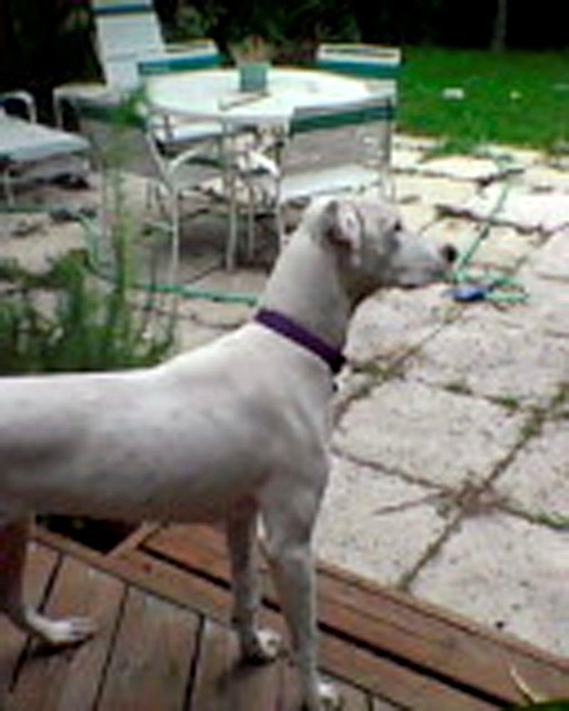 Dog 1 for blog