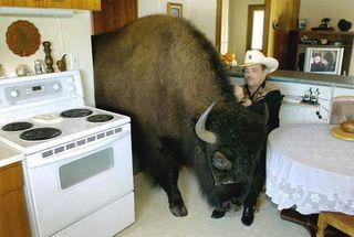 Buffalokitchen