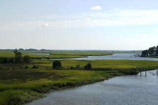 Tybee marsh
