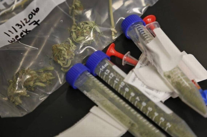 Cannabis samples Juste