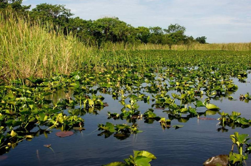 Polluted everglades