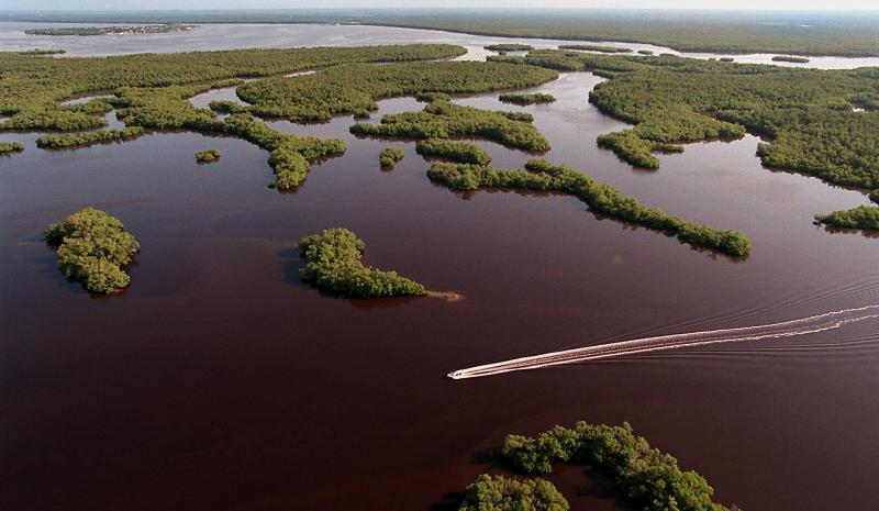 Everglades aerial (2)