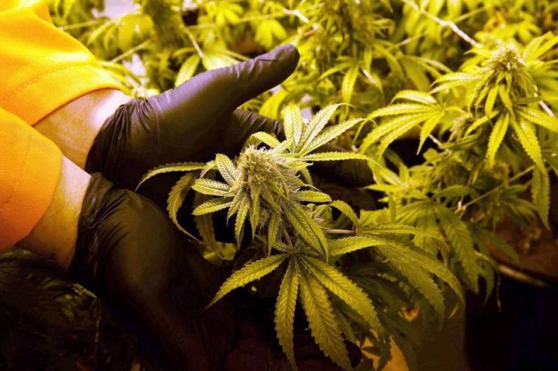 Florida Election Marijuana
