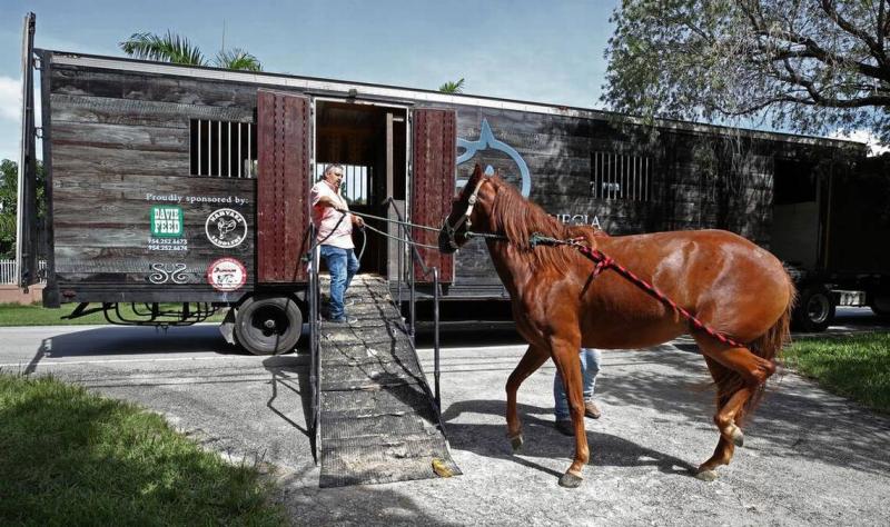 0435+Horse+Evacuation+090717