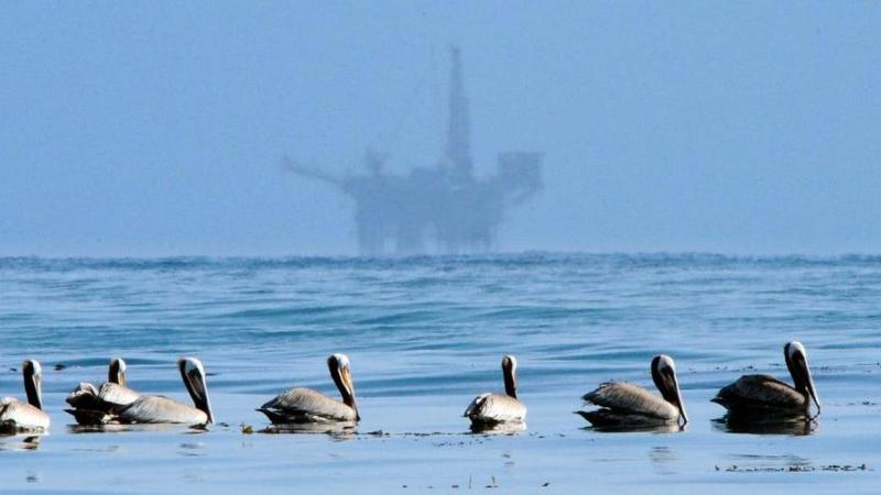 Trump offshore drilling