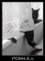 Cat00_bootz_pjspets_ho_2