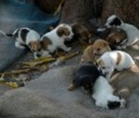 Rescued00_puppies_pjtspets_2