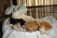 Heidis_kittens