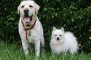 Dogs28_pets_pro_ho_3