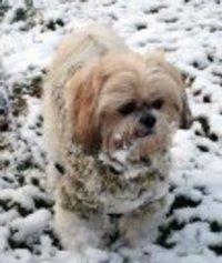Pomo00_snow_pjtspets_ho