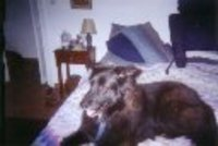 Black_dog_bed_3