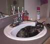 Toots_in_sink