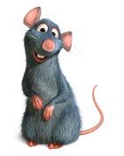 Ratatouillefoto2